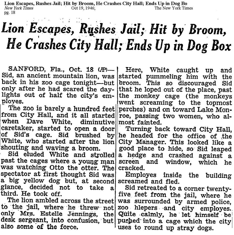 Lion escapes